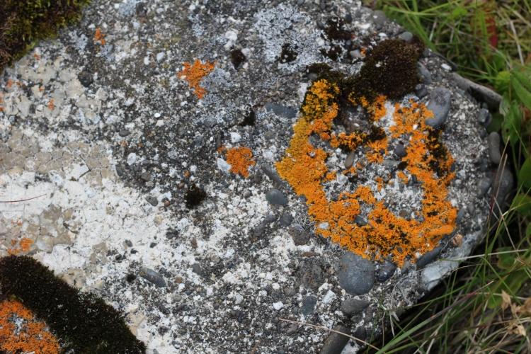 orange rock (je ne serai pas sauvée)